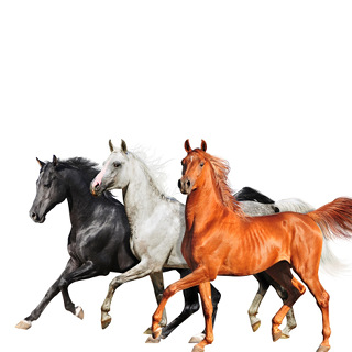 No.1 Old Town Road - Lil Nas X Featuring Billy Ray Cyrus_w320.jpg